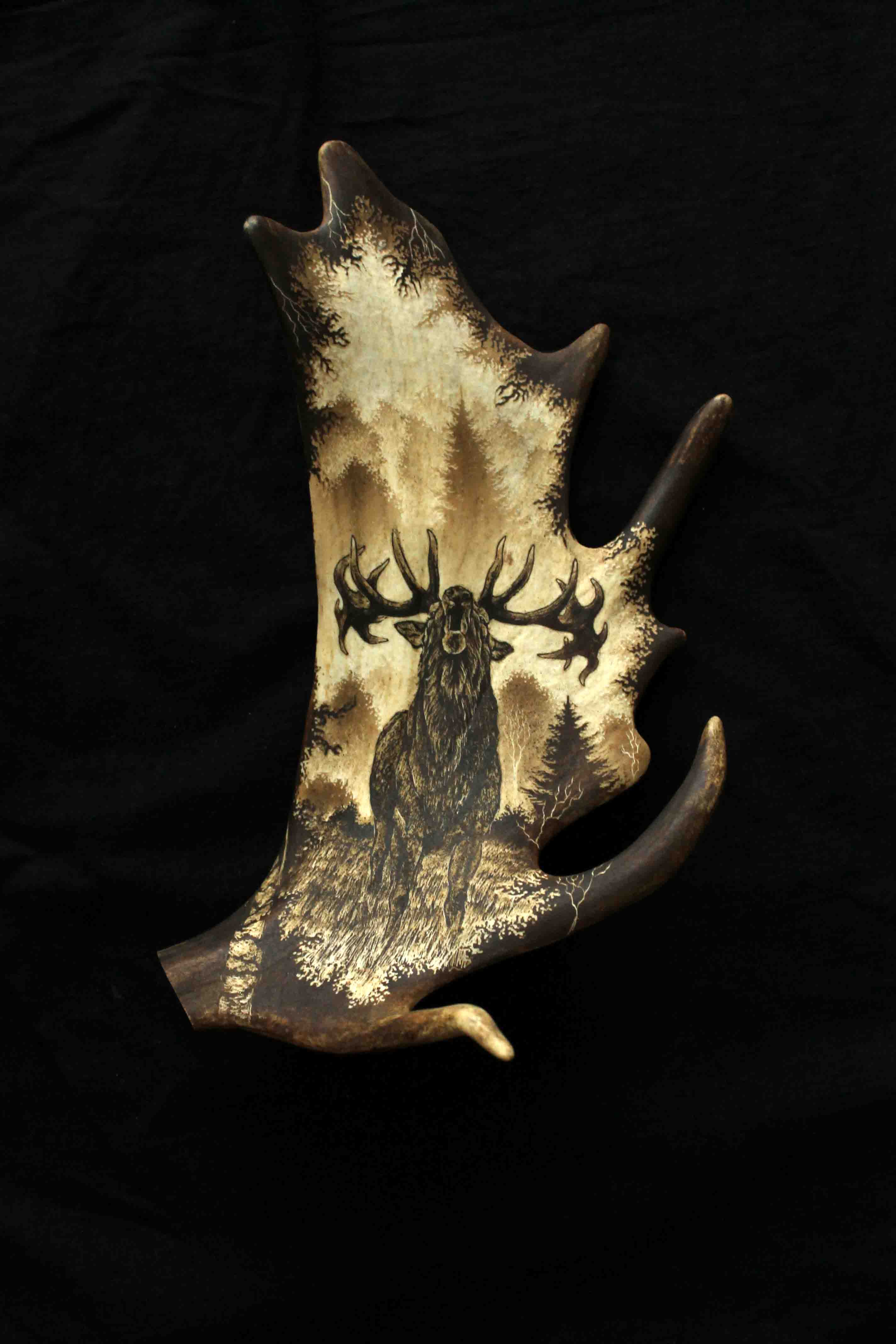 Deer Antler Engraving 1