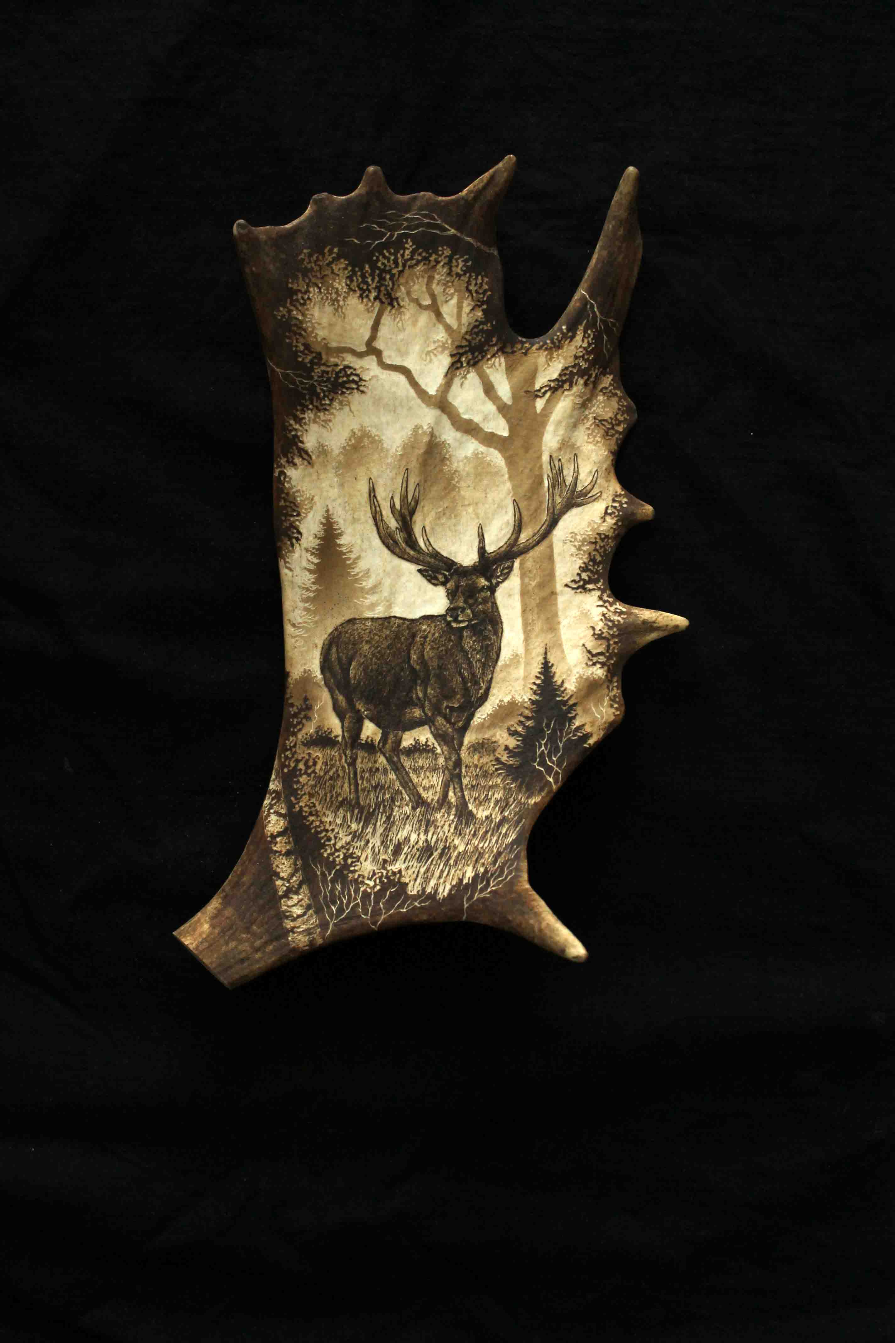 Deer Antler Engraving 7