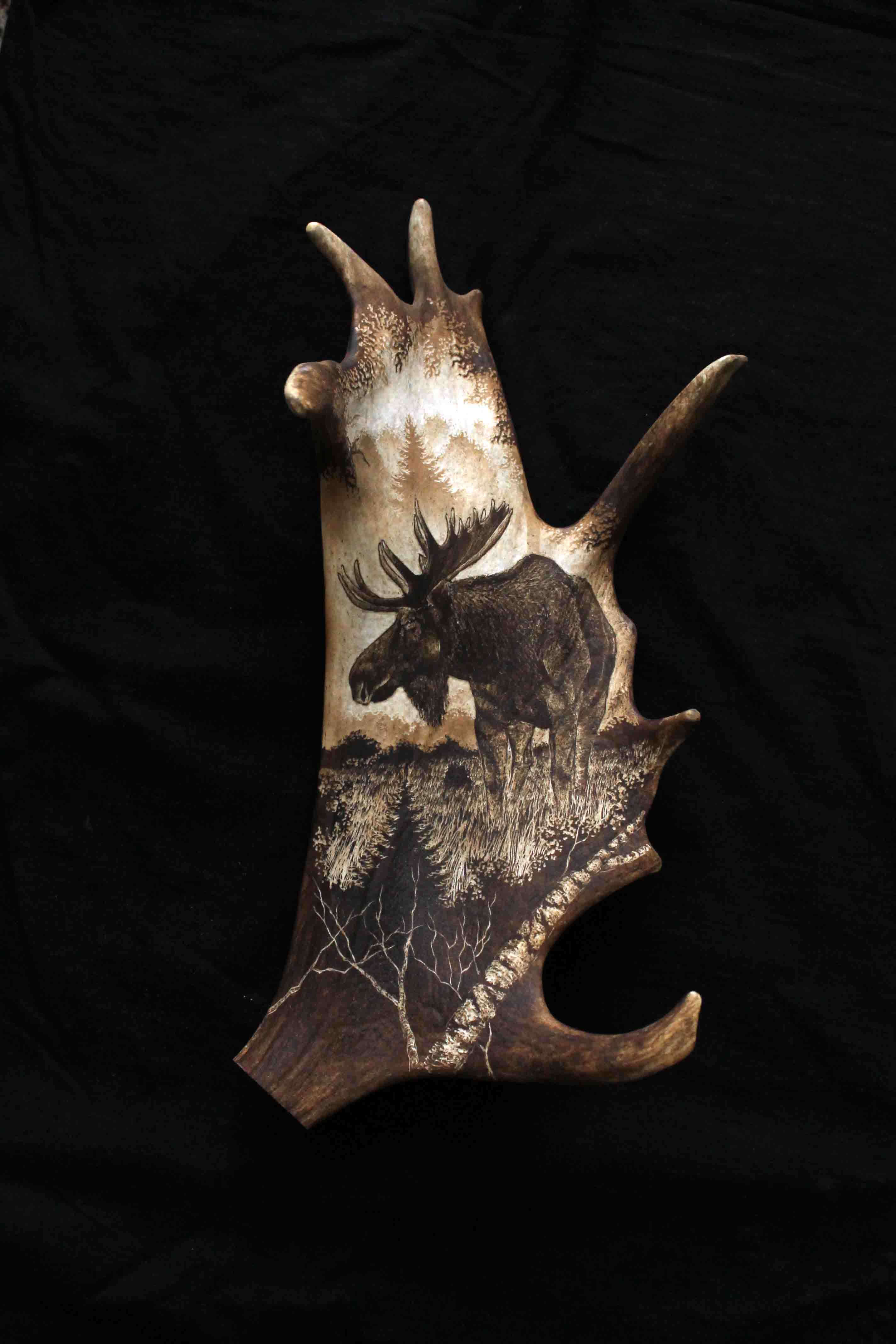 Moose Antler Engraving 1